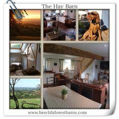 Hay Barn, Dog Friends, Loft, Cottage, Bed, Furniture, Home Decor, Lofts, Stream Bed
