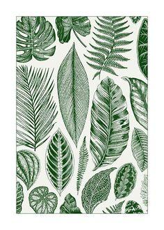 Green Leaves Poster in der Gruppe Poster / Größen und Formate / 30x40cm bei Desenio AB (8782)
