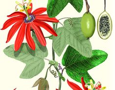 Botany, New Work, Behance, Photoshop, Paintings, Gallery, Illustration, Check, Plants