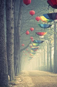 Not quite what you'd expect on a walk in the woods ; )  (Umbrellas at Nami Island, S. Korea, by ohirtenfelder, via Flickr)