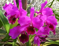 Horticulture Tips For The Best Bountiful Harvest - My Easy Garden Ideas Purple Orchids, Planting Bulbs, Planting Flowers, Growing Orchids, Flora Flowers, Wonderful Flowers, Orchid Plants, Easy Garden, Floral Arrangements