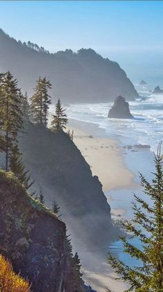 Light fog at Boardman State Park on the southern Oregon coast, USA