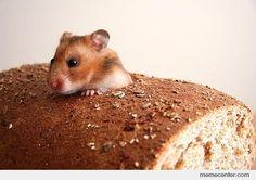 Hamster bread!