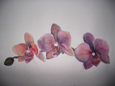 Acrylic on paper, Orchids: Taryn Healey. I now have this tattooed under my arm Orchid Flower Tattoos, Tattoo Floral, Stay Calm, Tatoos, Orchids, Tatting, Body Art, Piercings, Tattoo Ideas