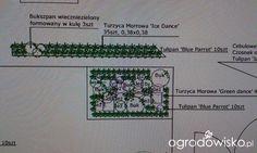 Nowocześnie u Kasji...kiedyś będzie:-) - strona 66 - Forum ogrodnicze - Ogrodowisko