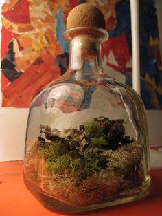Terrarium I made from Patron Bottle