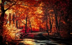 The colors of Autumn - Part VIII by myINQI.deviantart.com on @deviantART
