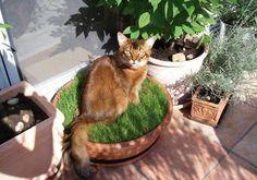 Die 225 Besten Bilder Von Katzen Cat Furniture Dog Cat Und Cat