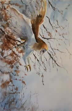 Barn Owl in flight by Robert Mee Bird Paintings, Watercolor Paintings, Bird Drawings, Painting & Drawing, Paint Colors, Owl, Barn, Colour, Artist