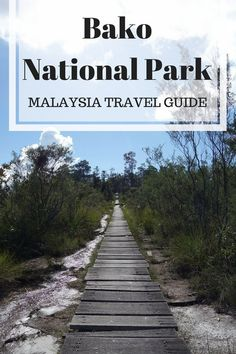 Bako National Park in Kuching, full travel guide: accomodation, entrance fee, how to get there, trails... #malaysia #travel #nationalpark