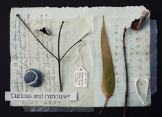 curious and curiouser by Fiona Watson  (wild goose chase, via Flickr)