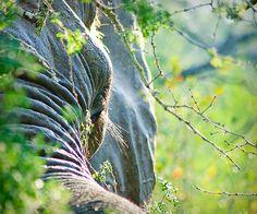 Elephant at Lion Sands River Lodge Krueger National park South Africa safari travel