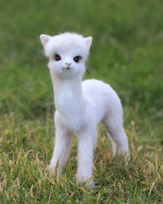 Tiny Baby Animals, Cutest Animals On Earth, Baby Animals Super Cute, Cute Animals Puppies, Baby Animals Pictures, Cute Animal Photos, Cute Animal Drawings, Cute Little Animals, Cute Dogs And Puppies