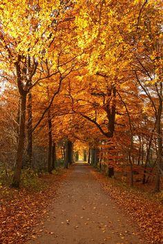 O Hushed October Morning Mild