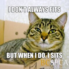 Pictured is Sari, waiting for her forever home at the BC SPCA Kamloops & District Branch