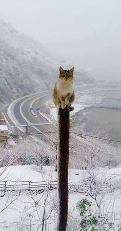 "Kitty-Cat: ""Why am I up this tall pole? Do not worry, everything is under MY control!"" ♥ (Written By: Lynn Chateau © )"