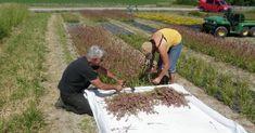 Nå tilbyr Nibio frøblandinger til norske blomsterenger - Norsk Landbruk Nature