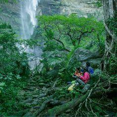 生命の楽園 西表島   八重山 MICE STYLE