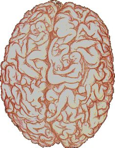 Too funny not to pin. A man's brain. (Goes perfectly with yesterday's brain!)