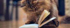 Gatti in libreria! Rilassarsi tra un buon libro e il suono delle fusa