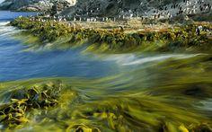 Seaweeds at The Snares Islands, New Zeland