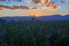🌐 New free photo at Avopix.com - Landscape Sky Clouds    ☑ https://avopix.com/photo/12029-landscape-sky-clouds    #landscape #sky #clouds #tree #grass #avopix #free #photos #public #domain