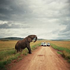 This is so raw and real...I want to do this before I die...                      African Safari. Yes, we will do this.