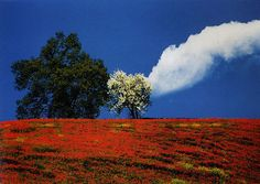 Fontana,Paysage, arbre et nuage,Italie,1995