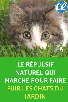 Le Répulsif Naturel Qui Marche Pour Faire Fuir les Chats du Jardin. Anti Chat, Garden Online, Permaculture, Container Gardening, Cats, Diy, Important, Cocktails, Gardens