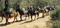 Information about Horse Riding Trips in Menorca, Balearic Islands, Spain Horse Information, Real Cowboys, Balearic Islands, Menorca, Horse Riding, Club, The Great Outdoors, Trip Planning, Equestrian