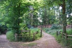All listings - Places to go - Family Walks & Cycles - Chantry Wood Surrey, Walks, Places To Go, Things To Do, Country Roads, Bike, Business, Things To Make, Bicycle