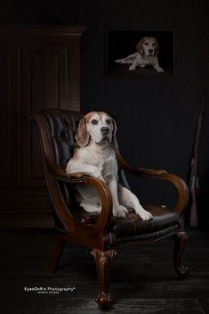 Are you interested in a Beagle? Well, the Beagle is one of the few popular dogs that will adapt much faster to any home. Dog Training Methods, Basic Dog Training, Dog Training Techniques, Training Dogs, Crate Training, Art Beagle, Beagle Puppy, Most Popular Dog Breeds, Best Dog Breeds