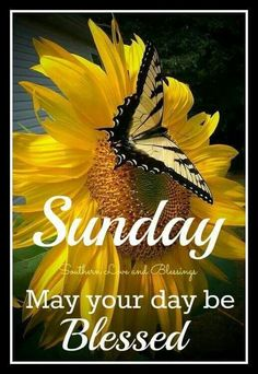 Sunday May Your Day Be Blessed good morning sunday sunday quotes blessed sunday…