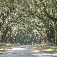 Le parc historique de Wormsloe Savannah Georgie-3