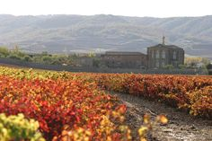 Monasterio de Cañas, rodeado de viñedos en otoño #LaRiojaApetece