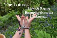 The Lotus Light & Beauty Emerging from the Darkness. I love the lotus mudra and the symbolism behind it xx