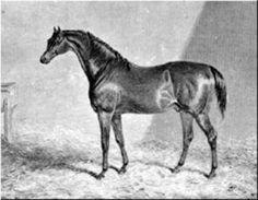 Liverpool(1828)(C)Tramp- Whisker Mare By Whisker. 3x4 To Potoooooooo, 4x5 To Trentham, Highflyer & Woodpecker, 4x4x5x5 To Eclipse, 5x5x5x5 To Herod.
