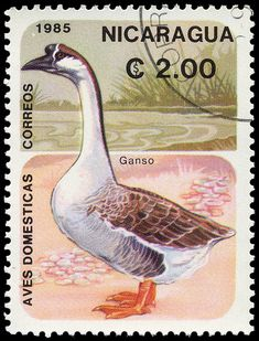 Aves Domesticas, Ganso (goose). Stamp from Nicaragua circa 1985