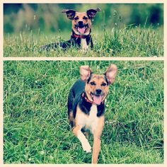 Lil' Zoey enjoying her first time at camp on this beautiful weekend! ☀️#evasplaypupsPA #dogs #dogcamp #dogsinnature #runfree #runlikethewind #happytails #prettygirl #playtime #itsadogslife #dogdaysofsummer #brooklyndogs #muttigrees #dogsofinstagram #instapup #petportraits #doggyvacays #doggievacays #dogboarding #endlessmountains #mountpleasant #northeasternpa #PA #pennsylvania