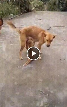 So many cute kittens videos compilation 2019 Cute Puppies And Kittens, Funny Cats And Dogs, Kittens Cutest, Animals And Pets, Baby Animals, Kitten Play Gear, Funny Cat Compilation, Cute Kitten Gif, Funny Laugh