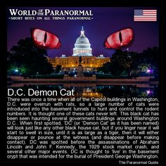 D.C. Demon Cat  Capitol Buildings, Washington D.C., US   'World of the Paranormal' are short bite sized posts covering paranormal locations, events, personalities and objects from all across the globe.   The Paranormal Guide for all things paranormal, strange, dark and macabre:  http://www.theparanormalguide.com/blog