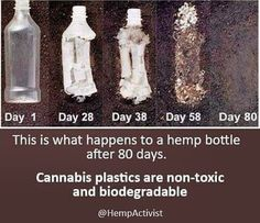 Did you know hemp plastics can biodegrade in as little as 80 days? This seems like such a good solution to our current plastic issue. What are your thoughts on this material being used mainstream like this 👆 . Natural Life, Natural Cures, Natural Healing, Appropriate Technology, Science, Medicinal Plants, Save The Planet, Natural Medicine, Plastic Bottles