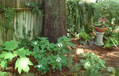 A bit rustic Garden Photos, Rustic, Plants, Country Primitive, Rustic Feel, Retro, Farmhouse Style, Planters, Primitives