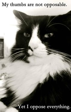 Forget the Polls: What Does Henri The Cat Think About Politics (VIDEO)