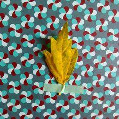 Althéa #flowleaf2015 #14octobre Plant Leaves, Pattern, Instagram Posts, Ideas, October 14, Leaves, Fall, Model, Thoughts