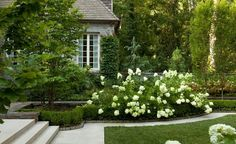 I have always held a soft spot for hydrangeas. Although I am no green thumb, so have sought advice from Mark of VDB Gardens on how to grow happy hydrangeas.