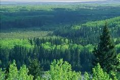 The Canadian Boreal Forest Agreement was established to protect this expansive forest. Learn more about it at the Webinar July Canadian Forest, Northern Canada, Happy Canada Day, Nature Photos, Acre, Beautiful Places, Creatures, House, Mountains