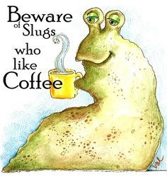 Pacific Northwest slugs run races, like beer and drink coffee.which one do you think is true? One Cup Coffee Maker, Coffee Mug Sets, I Love Coffee, Coffee Break, My Coffee, Coffee Drinks, Coffee Shop, Coffee Cups, Coffee Quotes Funny