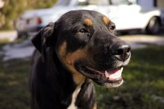 Wordpress, Dogs, Animals, Cats, Pet Dogs, The Great Outdoors, Animales, Animaux, Doggies