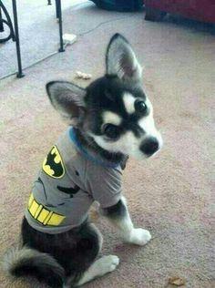 Liam's dog, cute as